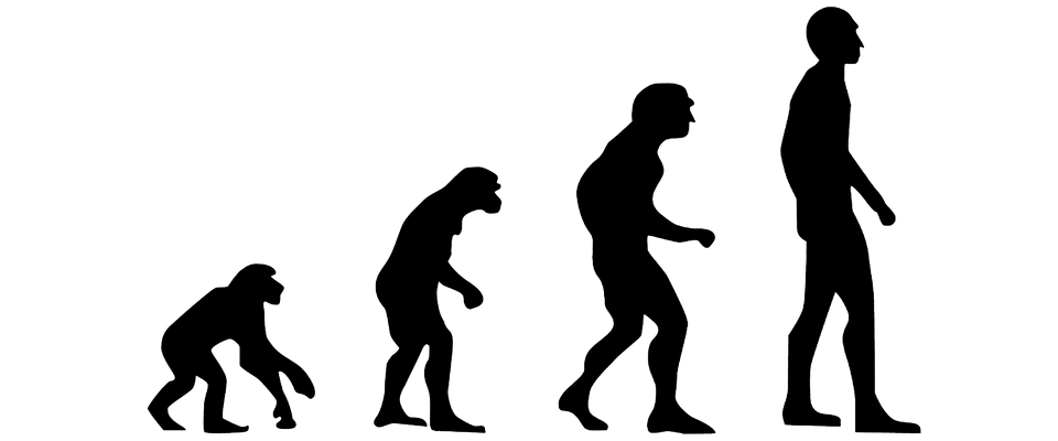 Psychofizjologiczne ujęcie ewolucji i dyssolucji