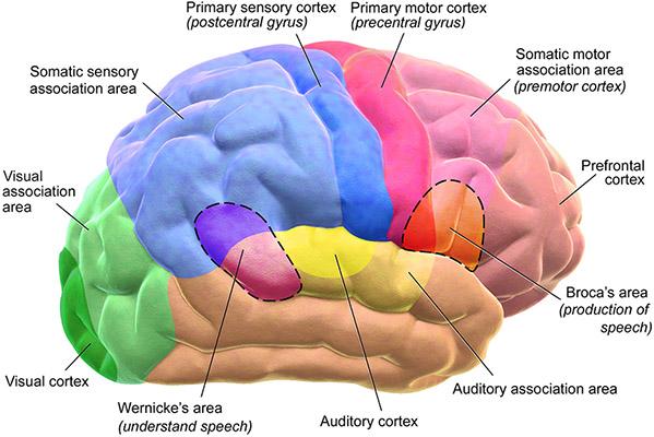 Neurologiczny pogląd na funkcje psychiczne